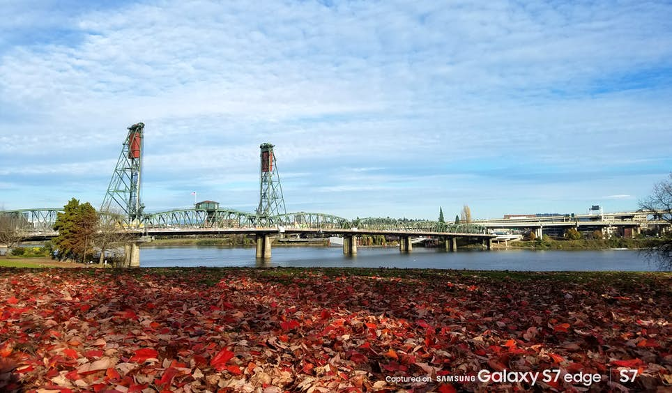 Autumn leaves carpet the ground in Tom McCall Waterfront Park, Portland © Mike Johansen / Captured on Samsung Galaxy S7 / S7 edge
