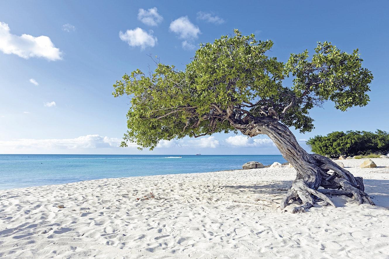 [Image: Aruba_shutterstockRF_221060530.jpg?q=72&sharp=10&w=1330]