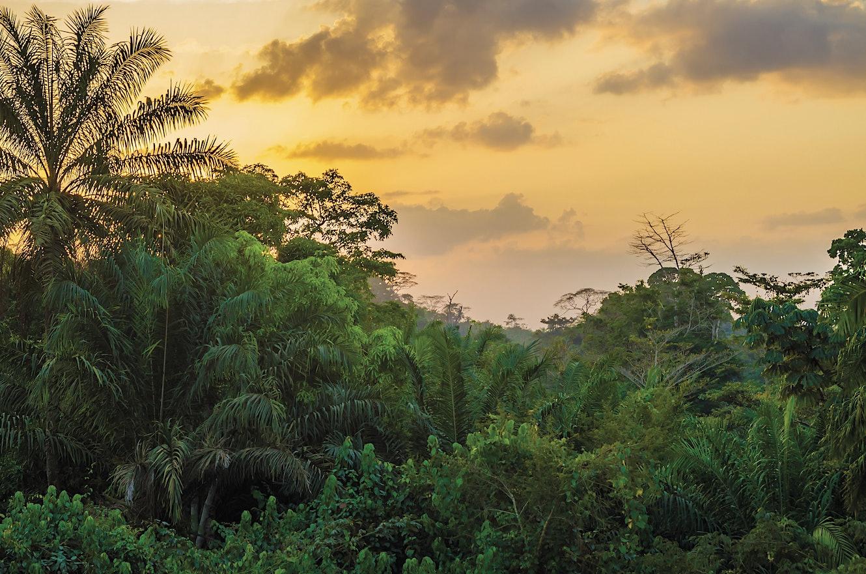 [Image: Liberia-1024842976.jpg?q=72&sharp=10&w=1330]
