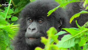 Sustainable Wildlife Program: Rwanda
