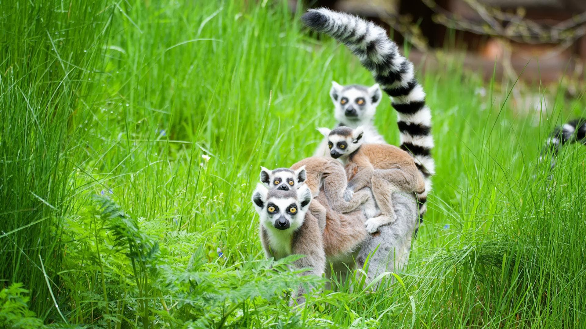 When To Go To Madagascar Lonely Planet Video