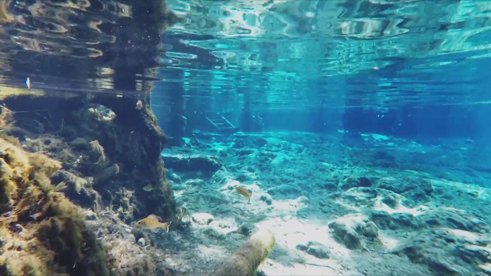 Snorkel In Ginnie Springs Florida Lonely Planet Video