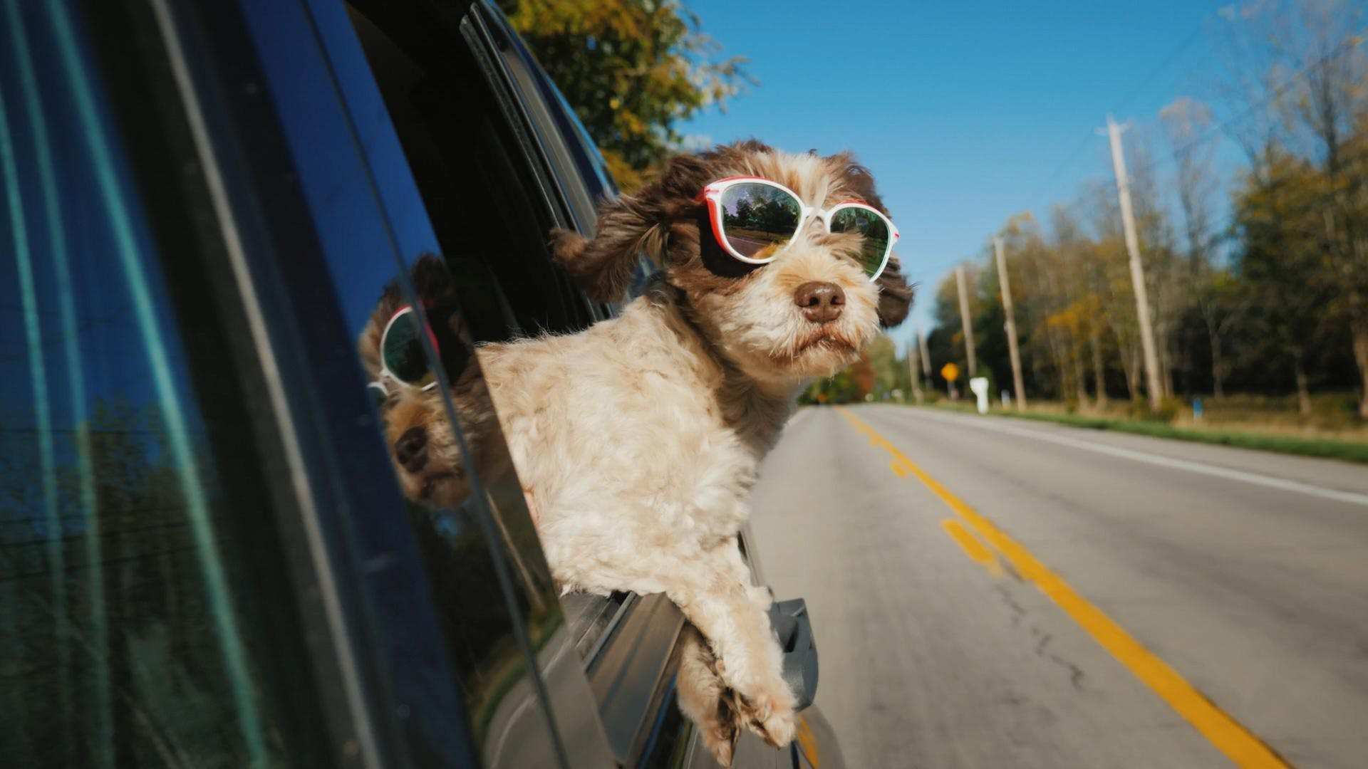 The best US cities to explore with your dog