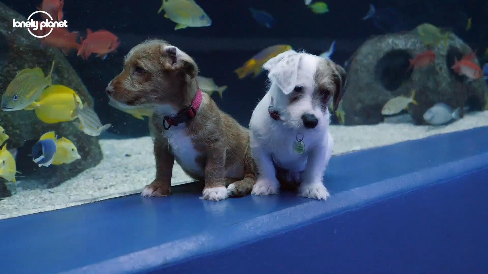 Watch These Adorable Puppies Roam Around An Aquarium